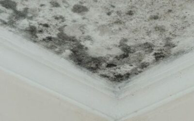 THE DISADVANTAGES OF USING HOUSEHOLD CLEANERS TO REMOVE MOLD IN YOUR HOME: INSIGHTS FROM A MOLD REMOVAL COMPANY IN MOUNT PROSPECT, ILLINOIS