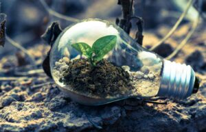 Lead Abatement & Mitigation
