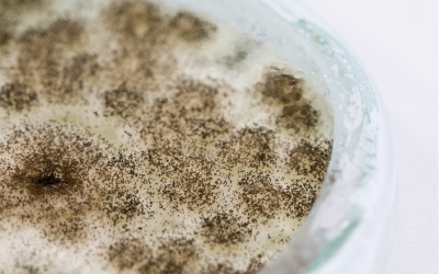 Different Types of Mold Testing Methods: Insights from a Mold Removal Company in Arlington Heights, Illinois